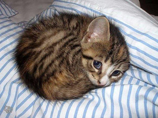 Всемирный День Кошек - Страница 10 Dbzurn10