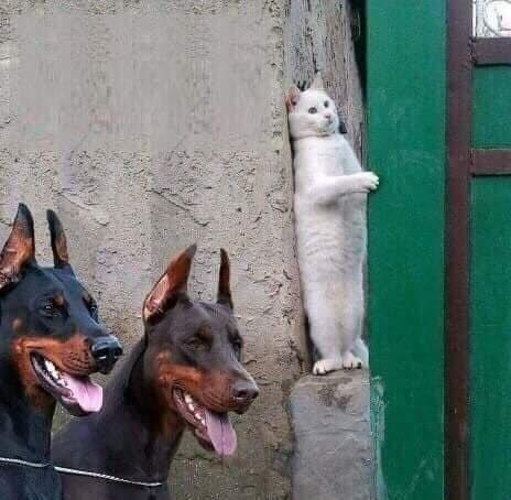 Всемирный День Кошек - Страница 10 Dfiqxc10
