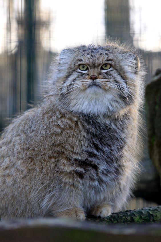 Всемирный День Кошек - Страница 13 Dk0jug10