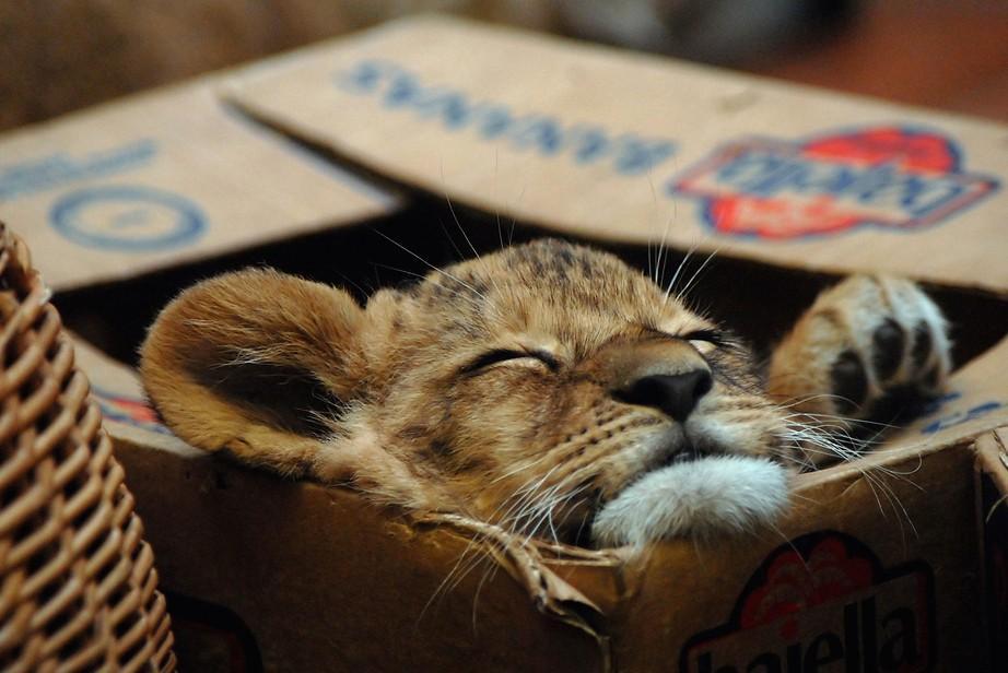 Всемирный День Кошек - Страница 13 Dk59x610