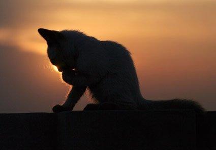 Всемирный День Кошек - Страница 15 Dm6x-j10