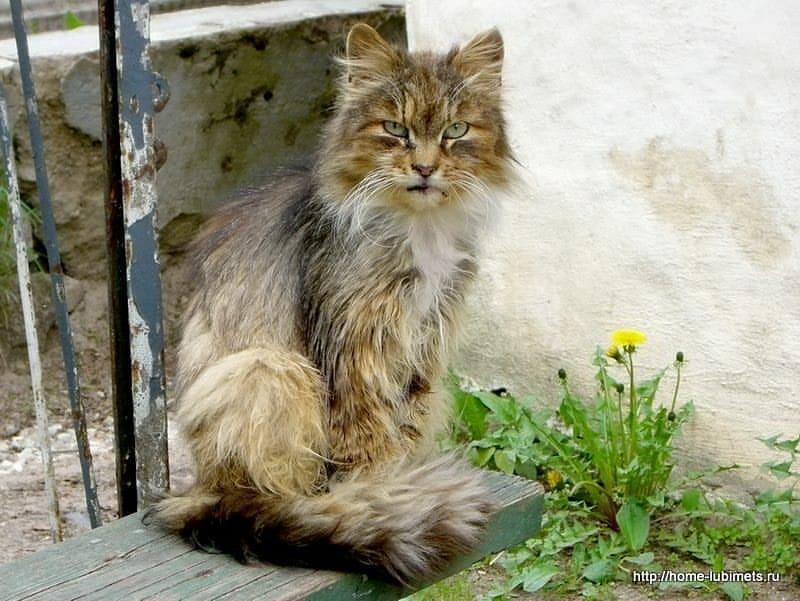 Всемирный День Кошек - Страница 15 Dmi_4-10