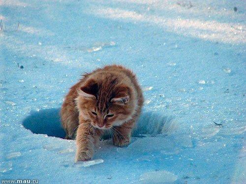 Всемирный День Кошек - Страница 13 Dwdycr10