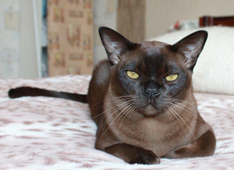 Всемирный День Кошек - Страница 13 Dxr5zh10