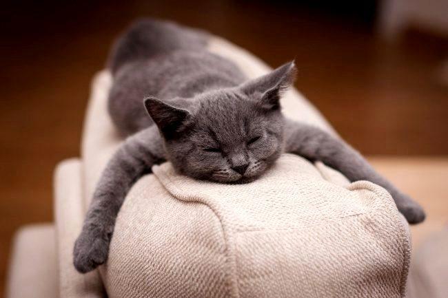 Всемирный День Кошек - Страница 10 Dy6t1g10