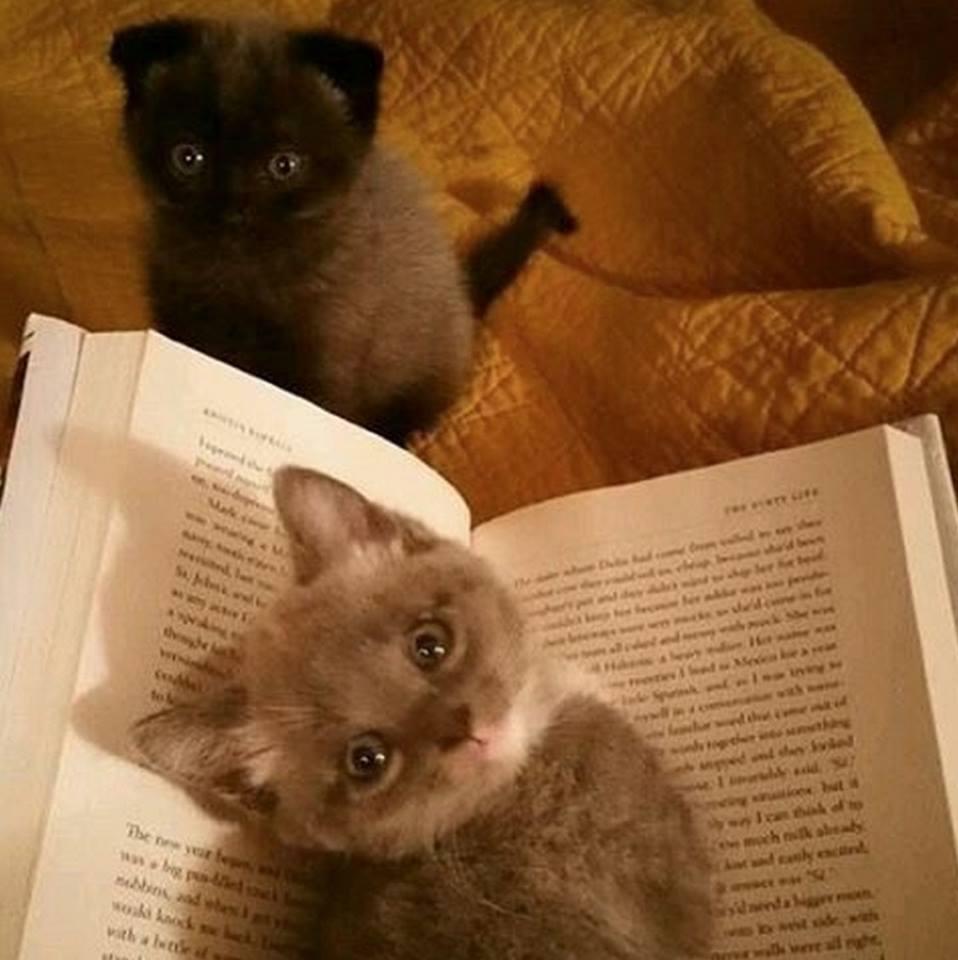 Всемирный День Кошек - Страница 11 Dzd9r410