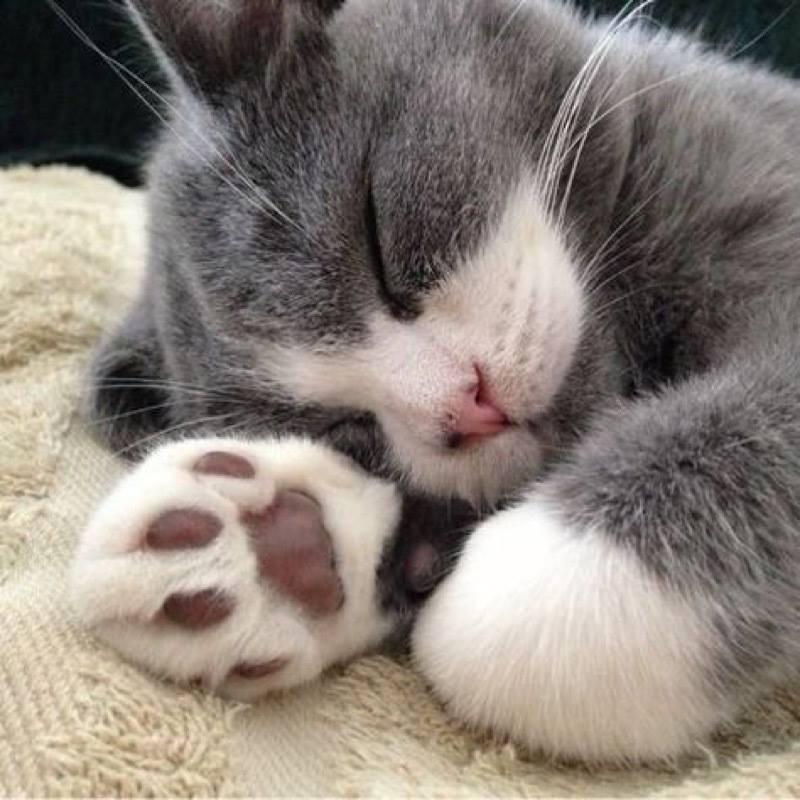 Всемирный День Кошек - Страница 11 Dzi_6e10