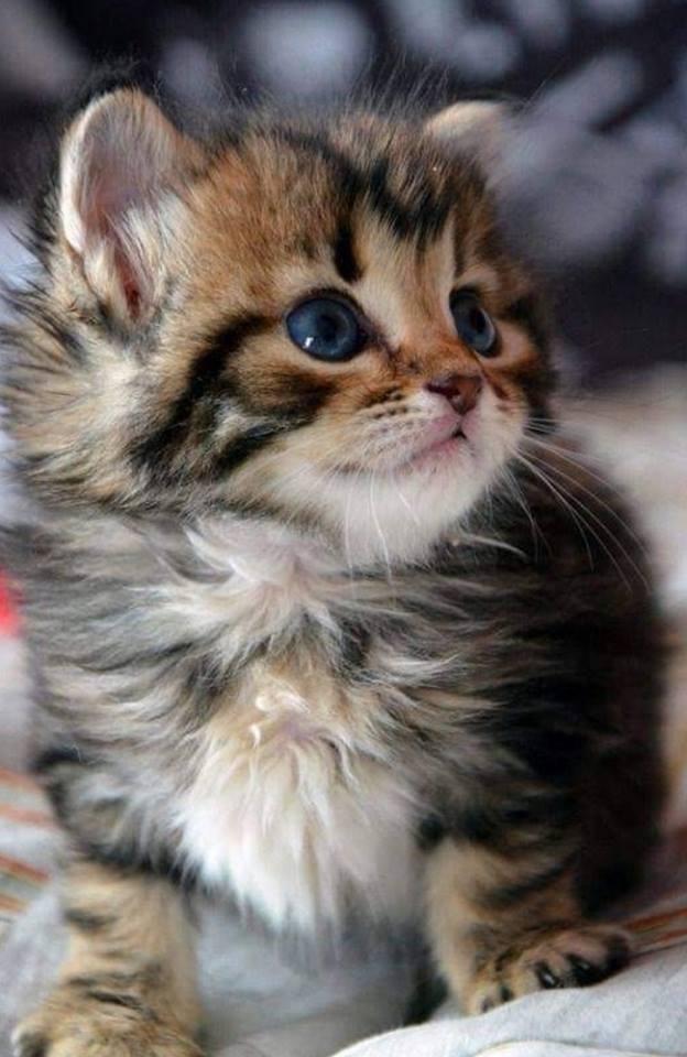 Всемирный День Кошек - Страница 13 Dzommw10