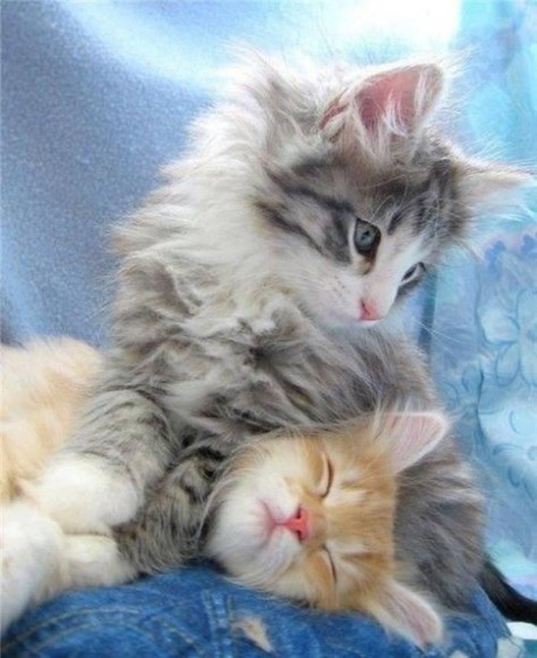 Всемирный День Кошек - Страница 13 Dzoqkz10