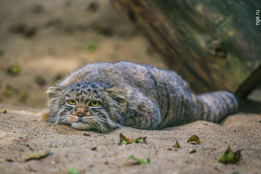 Всемирный День Кошек - Страница 10 Dzzu6b10