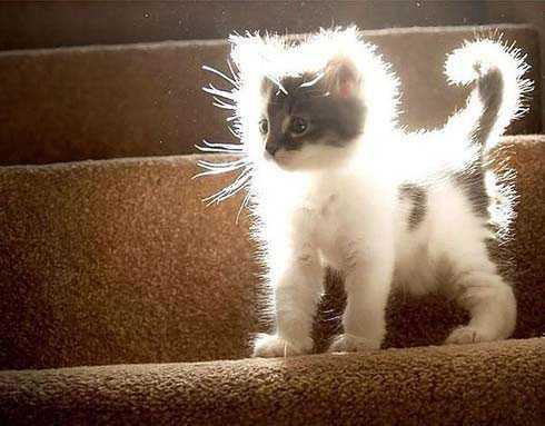 Всемирный День Кошек - Страница 13 Koshki10