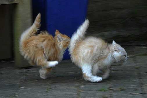 Всемирный День Кошек - Страница 13 Koshki11