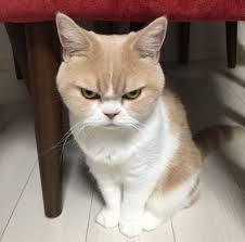 Всемирный День Кошек - Страница 15 Oo10