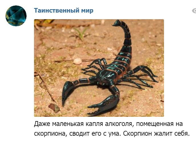 Капля алкоголя убивает скорпиона! Ouo268
