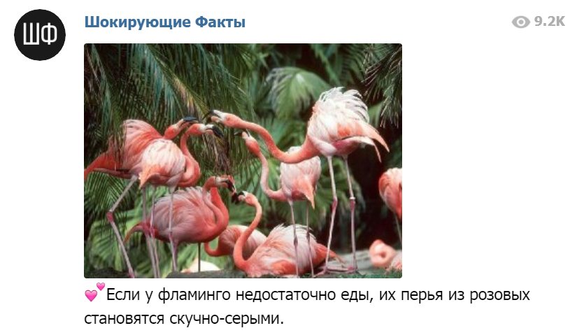Красивый фламинго- толстый фламинго! )) Ouo269