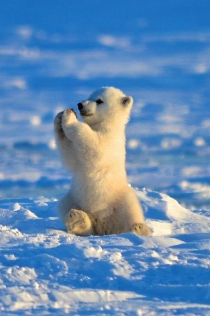 Fotos de animales de todo tipo incluyendo mascotas que más te gustan - Página 24 B7279b10