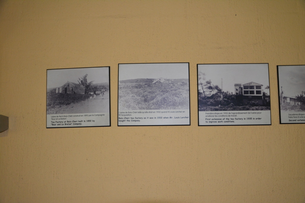 mon voyage a l'ile maurice - Page 6 Dsc_0440