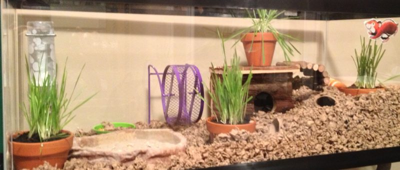 Plants In Mouse Cage? Fish-t10