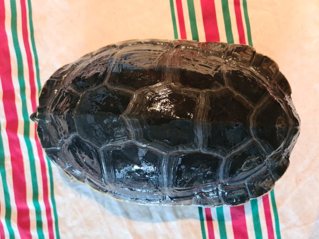 Problème de peau sur ma tortue 20210513