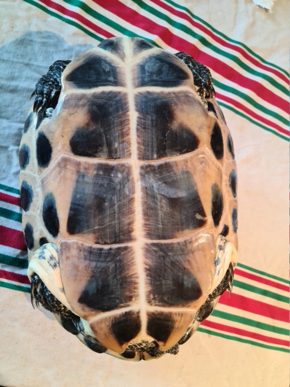 Problème de peau sur ma tortue 20210514