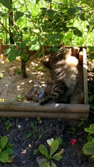 Mistigri, mâle tigré castré Dsc_0121