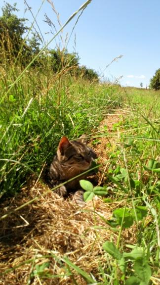 Mistigri, mâle tigré castré Dsc_0122