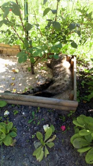 Mistigri, mâle tigré castré Dsc_0127