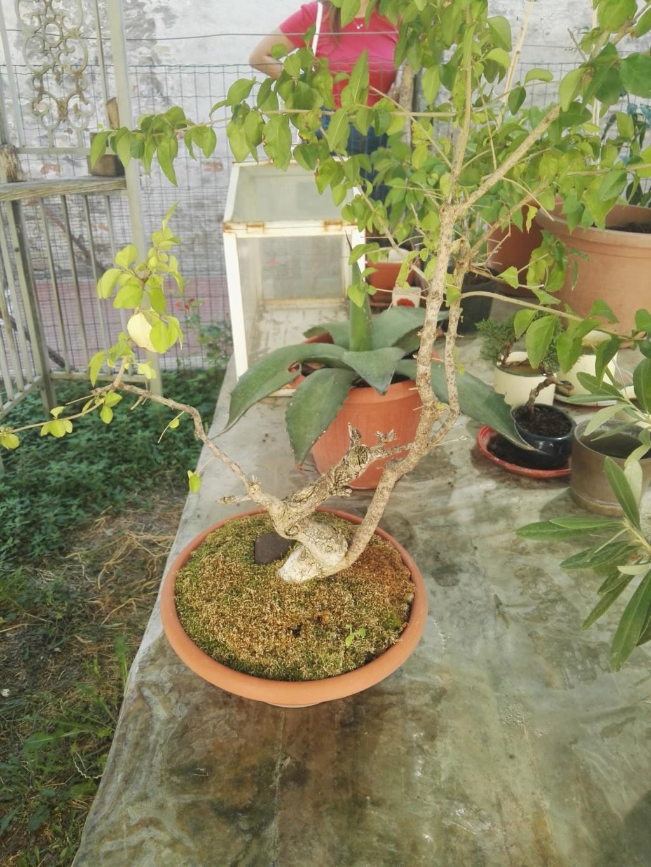 Aiuto i miei primi bonsai 39674610