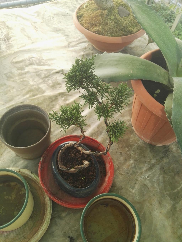 Aiuto i miei primi bonsai 39714710