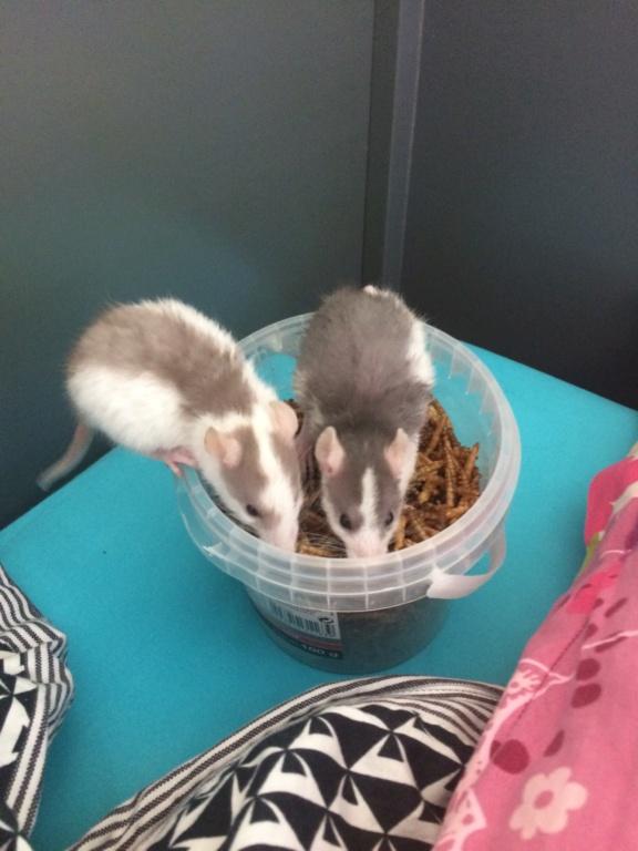 2 Petits Rats Mâles  Img_1515