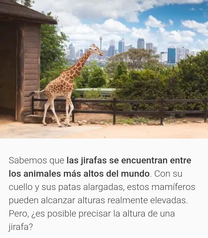 Animales mas altos del mundo 20181111