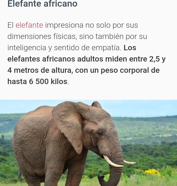 Animales mas altos del mundo 20181115