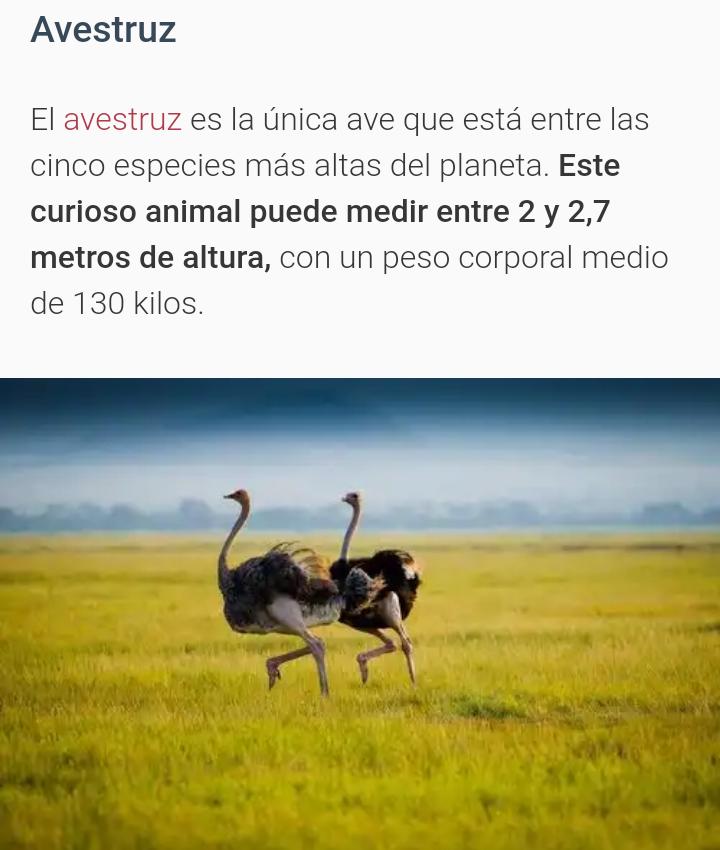 Animales mas altos del mundo 20181117