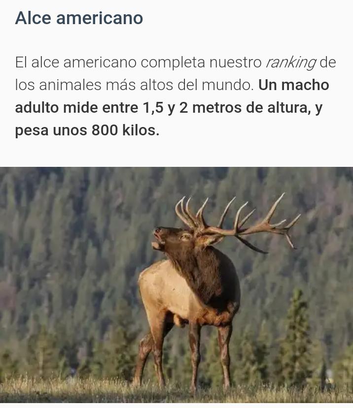 Animales mas altos del mundo 20181118