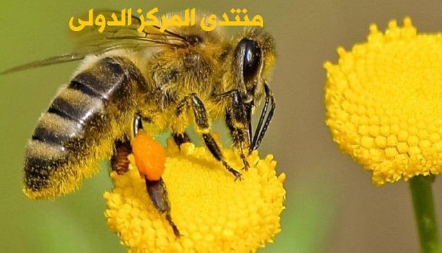 طريقة تربية النحل للمبتدئين  84843810