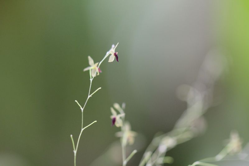 Miniatur-Orchideen Teil 5 - Seite 11 Eda8f310