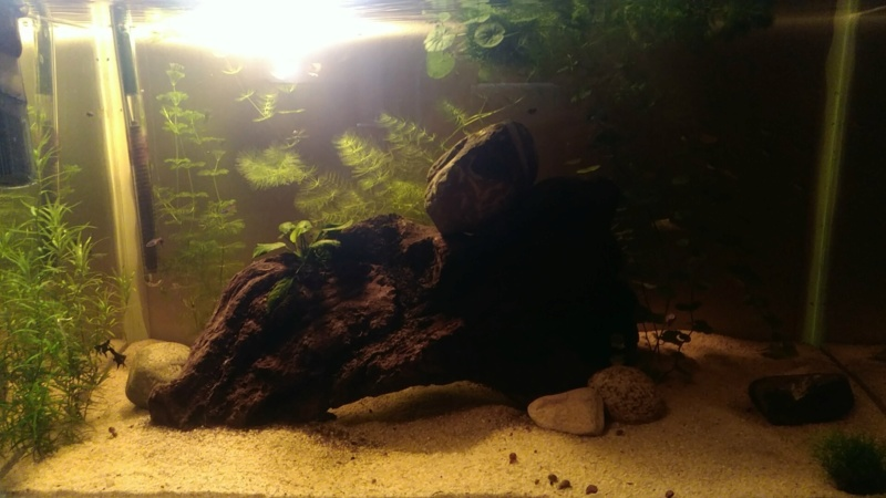 Salut tout le monde ! Aquari10
