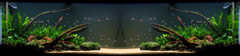 [Projet] Bac communautaire amazonien 900L Aquari11