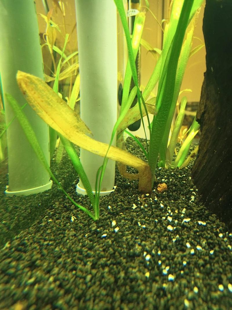 Feuille qui deviennent translucide  Plante15