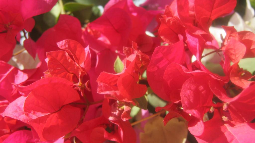 plante a identifier 1509 Img_2319