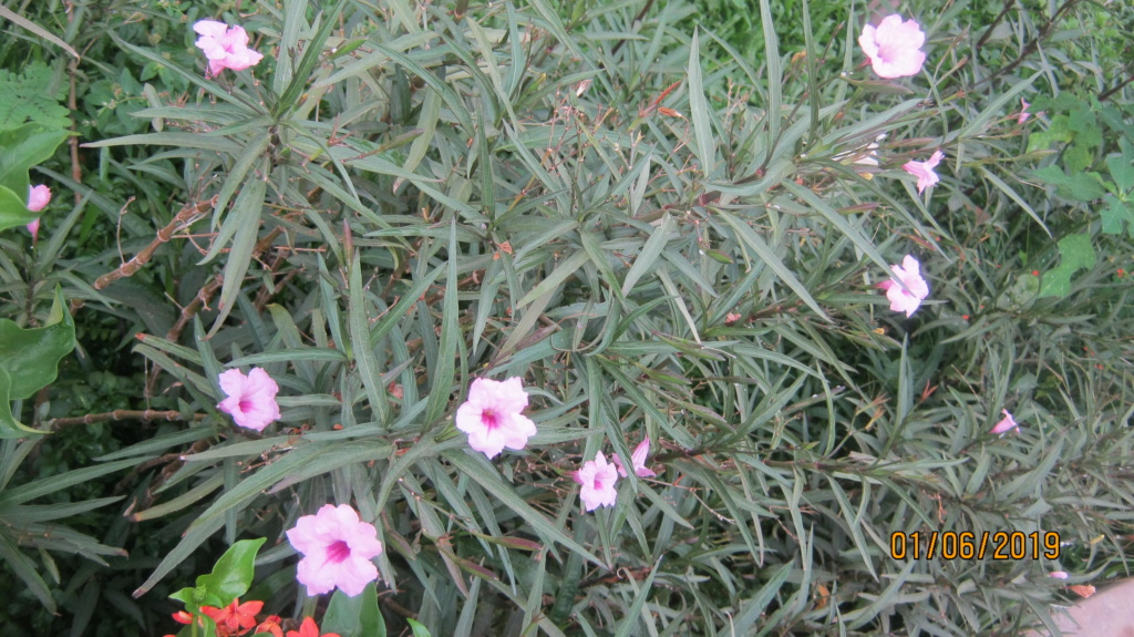 Au jardin de Kër Kumbë, la chaleur est là ! Img_2411