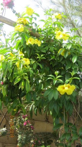 Au jardin de Kër Kumbë, la chaleur est là ! Img_2413
