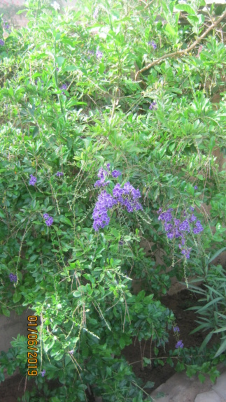 Au jardin de Kër Kumbë, la chaleur est là ! Img_2415