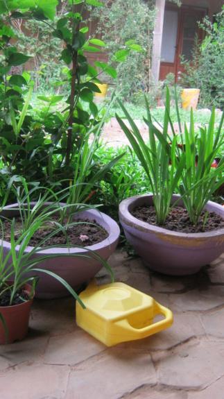 Au jardin de Kër Kumbë, la chaleur est là ! Img_2513