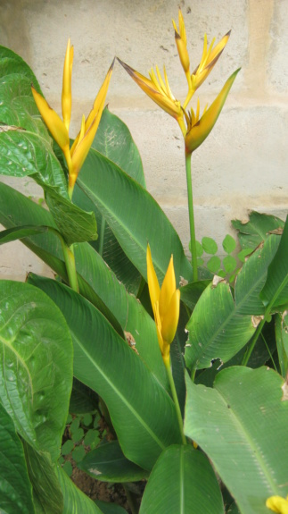 Au jardin de Kër Kumbë, la chaleur est là ! Img_2517