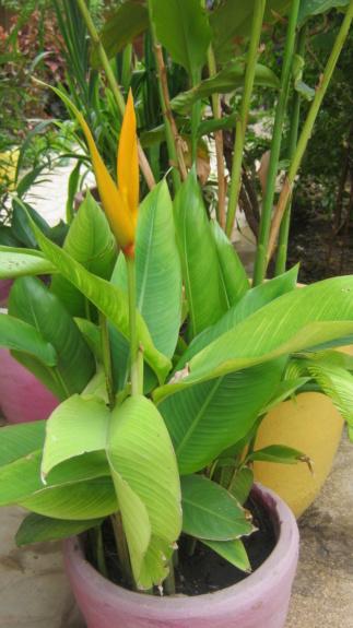 Au jardin de Kër Kumbë, la chaleur est là ! Img_2518