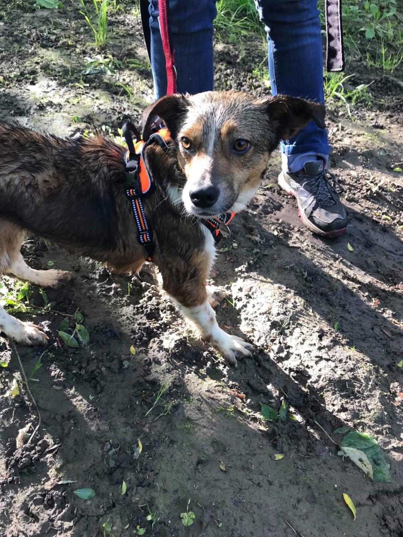 Ginka - femelle - fourrière de Târgu Frumos - sera en famille d'accueil dans le 67 en mai 21129710
