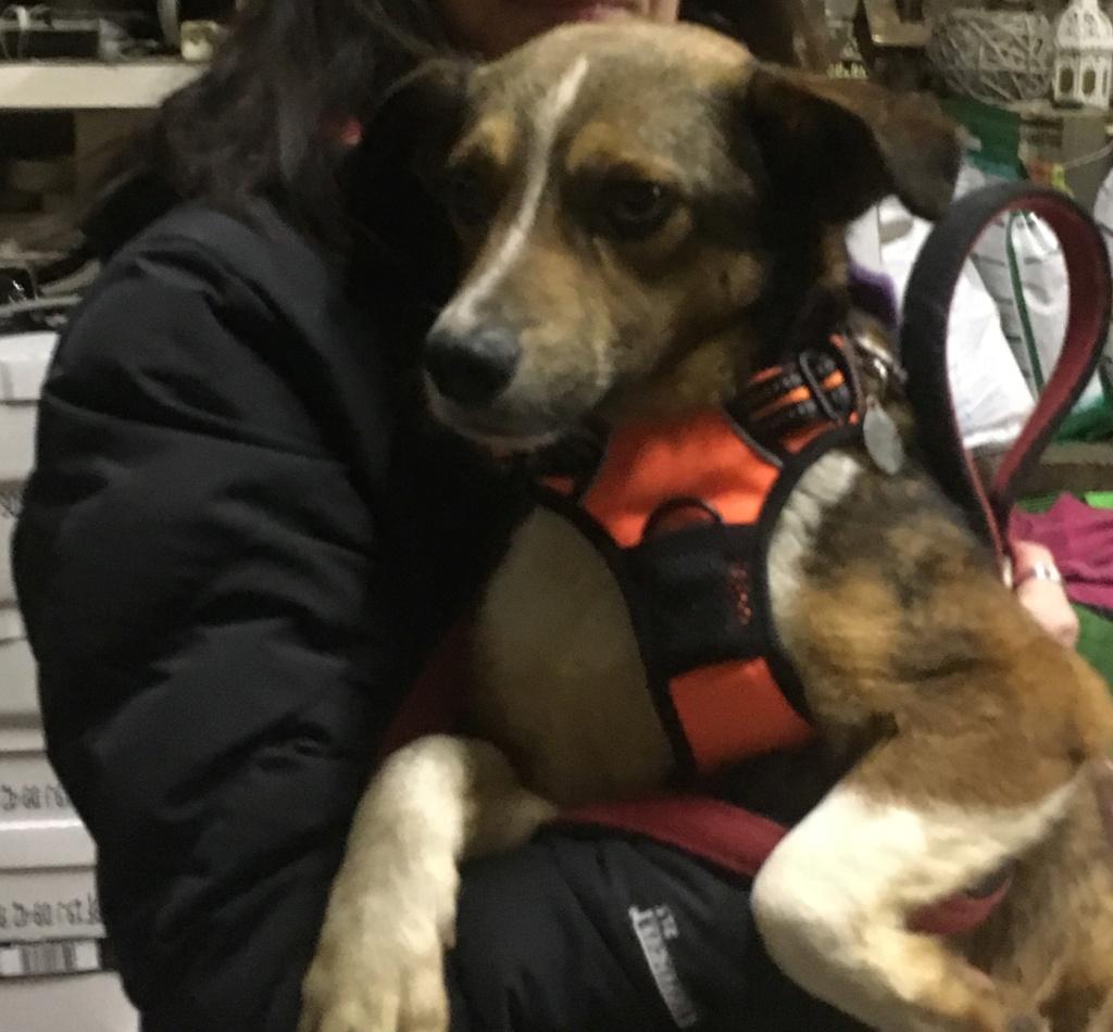 Ginka - femelle - fourrière de Târgu Frumos - sera en famille d'accueil dans le 67 en mai 3ed17510