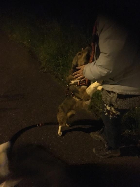 Ginka - femelle - fourrière de Târgu Frumos - sera en famille d'accueil dans le 67 en mai - Page 2 62485d10