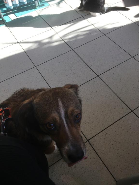 Ginka - femelle - fourrière de Târgu Frumos - sera en famille d'accueil dans le 67 en mai - Page 2 9bf3d410
